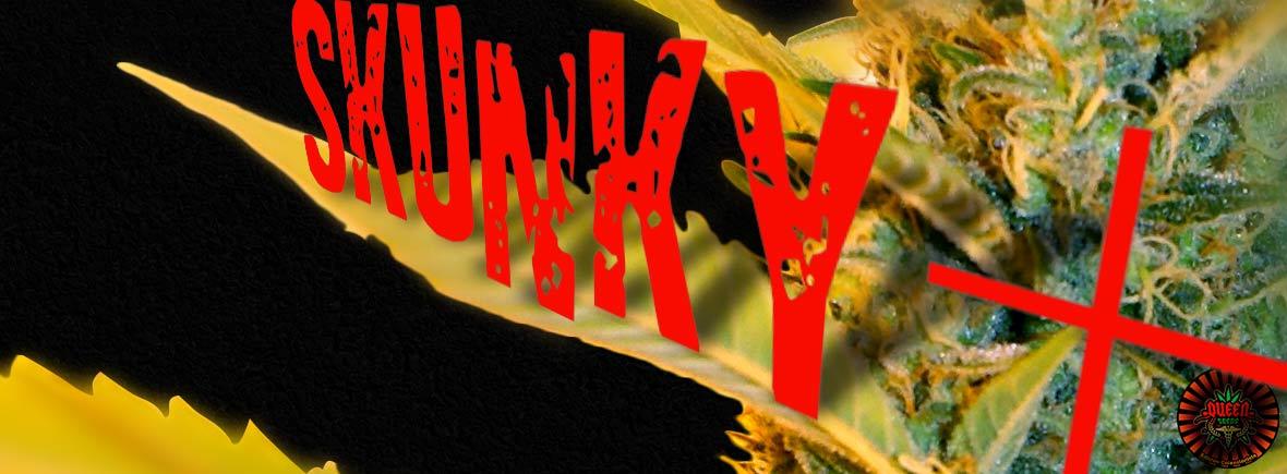 Skunky + - Queen Seeds