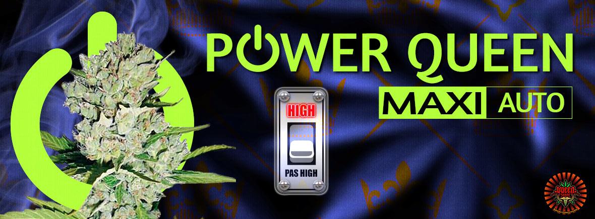 Power Queen Maxi Auto - Queen Seeds