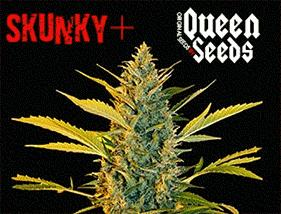 Skunky + Queen Seeds