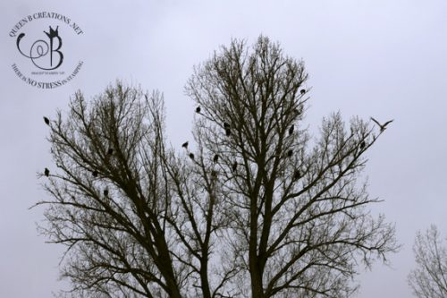 Eagle Tree in Southern Idaho