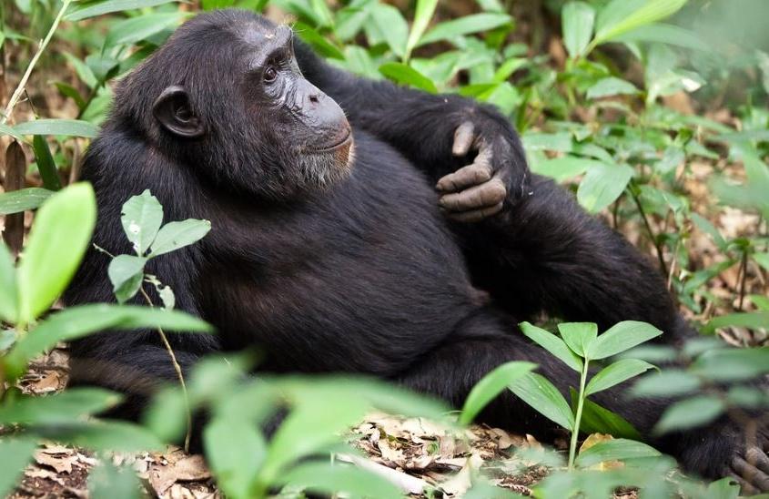 Kibale national park - uganda national park, uganda safaris