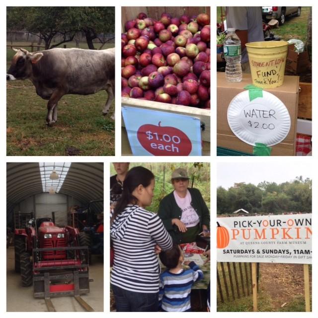 Queens Farm Museum