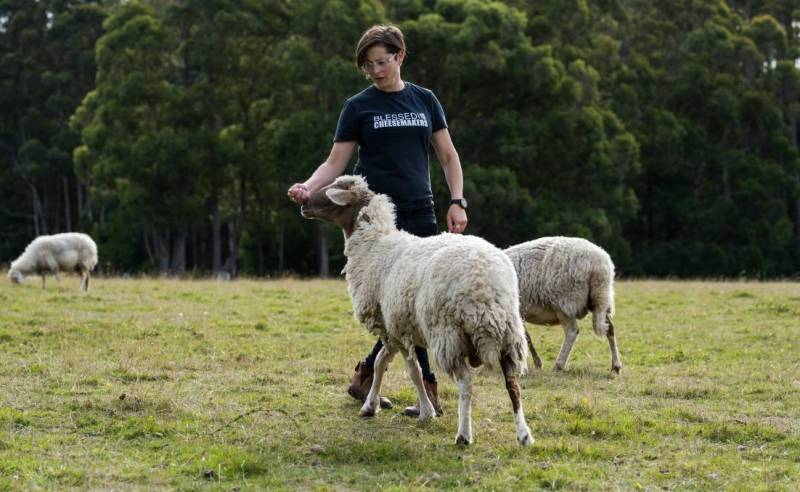 Grandvewe executive director Nicole Gilliver with some of the sheep on their Birchs Bay farm.
