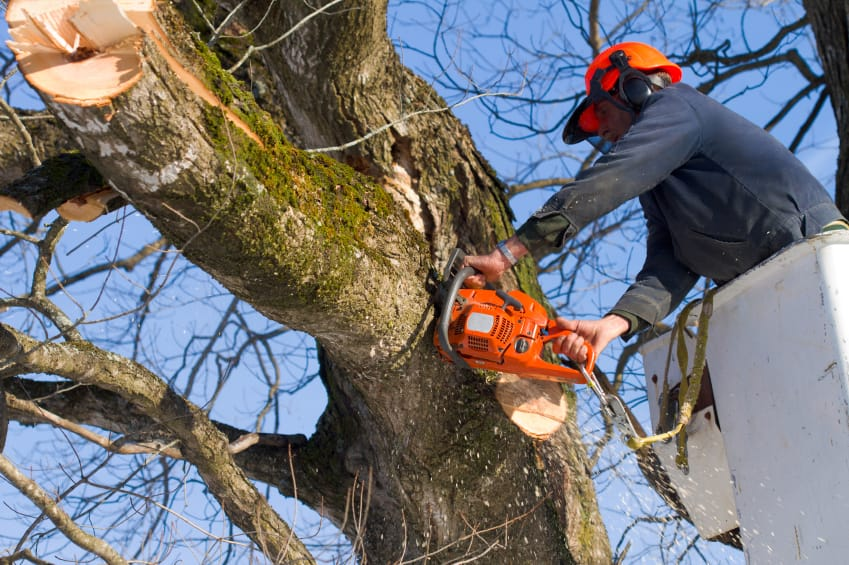 Image result for Tree Removal Services istock