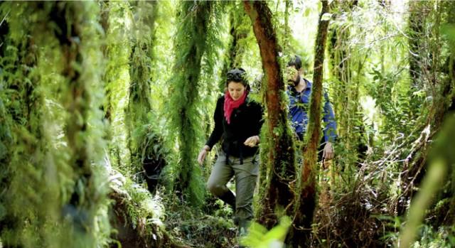 Deslúmbrate con la  Patagonia Norte y Bosque Nativo
