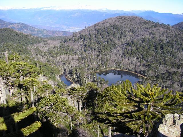 Explora los 5 mejores senderos de trekking en la Araucanía