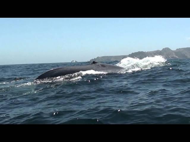 Chañaral de Aceituno: navega junto a cetáceos en un cautivante balneario