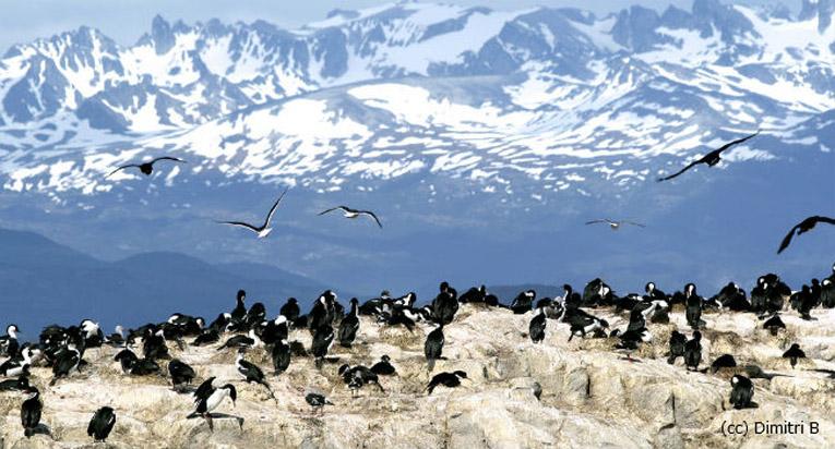 Cabo de Hornos: Un enigmático lugar para vivir una gran aventura