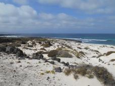 Punta de Palo