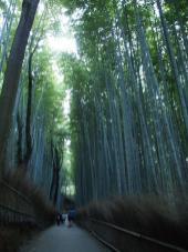 Forêt de bambous / Quartier d'Arashiyama (Kyoto)