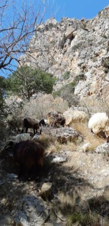 Preveli (Crète)