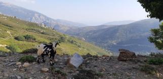 Sur le plateau d'Omalos (Crète)