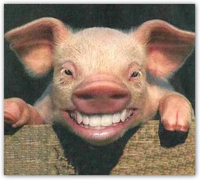 Resultado de imagen de cerdos riendo