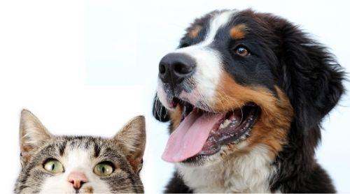 Seguros de mascotas y su potencial crecimiento