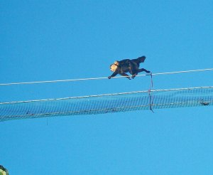 An adult monkey with young crossing a bridge.