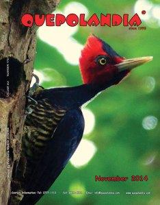 Quepolandia cover for November