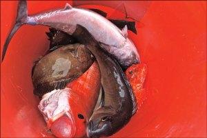 Bucket full of fish