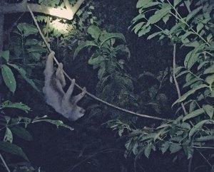Kermie climbing at night