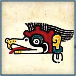 Maya King Vulture