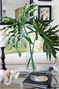 Monstera leaves in a vase