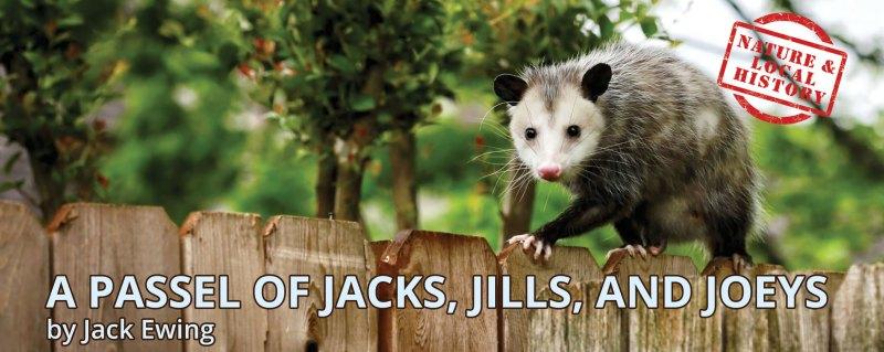 Opossum header