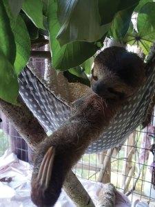 Monty in a hammock
