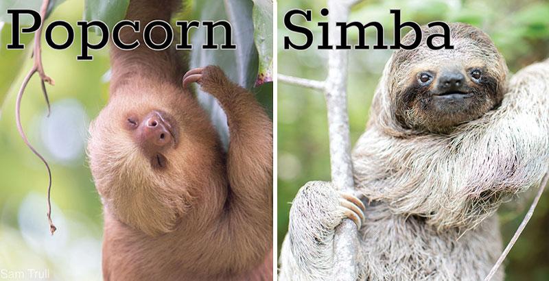 popcorn and simba