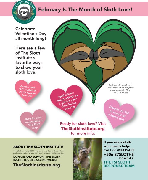 sloth love poster