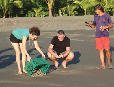 Releasing the turtles
