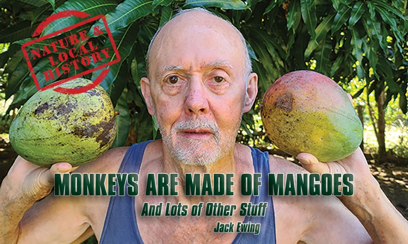 Jack holding two big mangoes, header