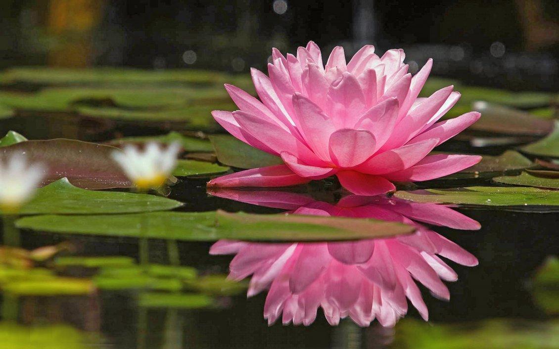 Resultado de imagem para ser um zen