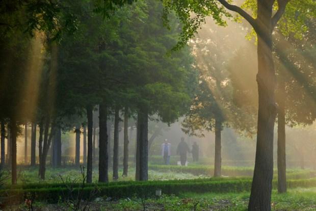Morning Meditation,cerveau,calmer,idée,main,étape,respirez,pratique,idées brillantes,