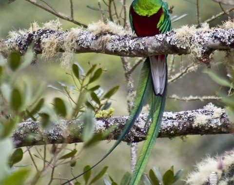 Quetzal Watching Tour in San Gerardo de Dota