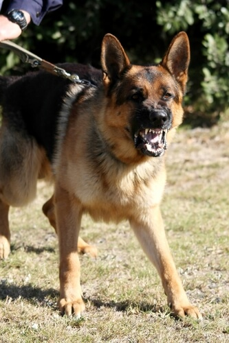 The Dog Trainer Dog Myths About Rank And Dominance