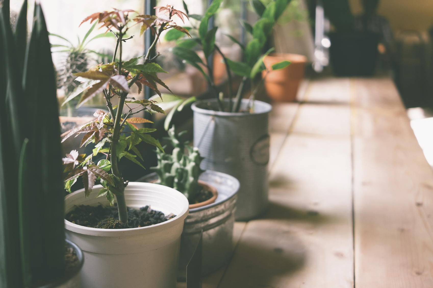 10 Common Houseplants And How To Take Care Of Them Zing