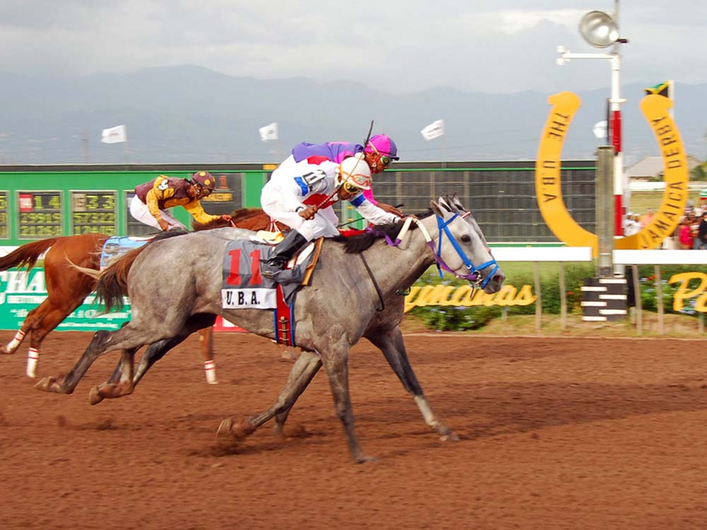 THE BATTLE OF THE GREYS - 2009 JAMAICA DERBY - He's Really Ok on the outside just getting the better of Bruceontheloose.