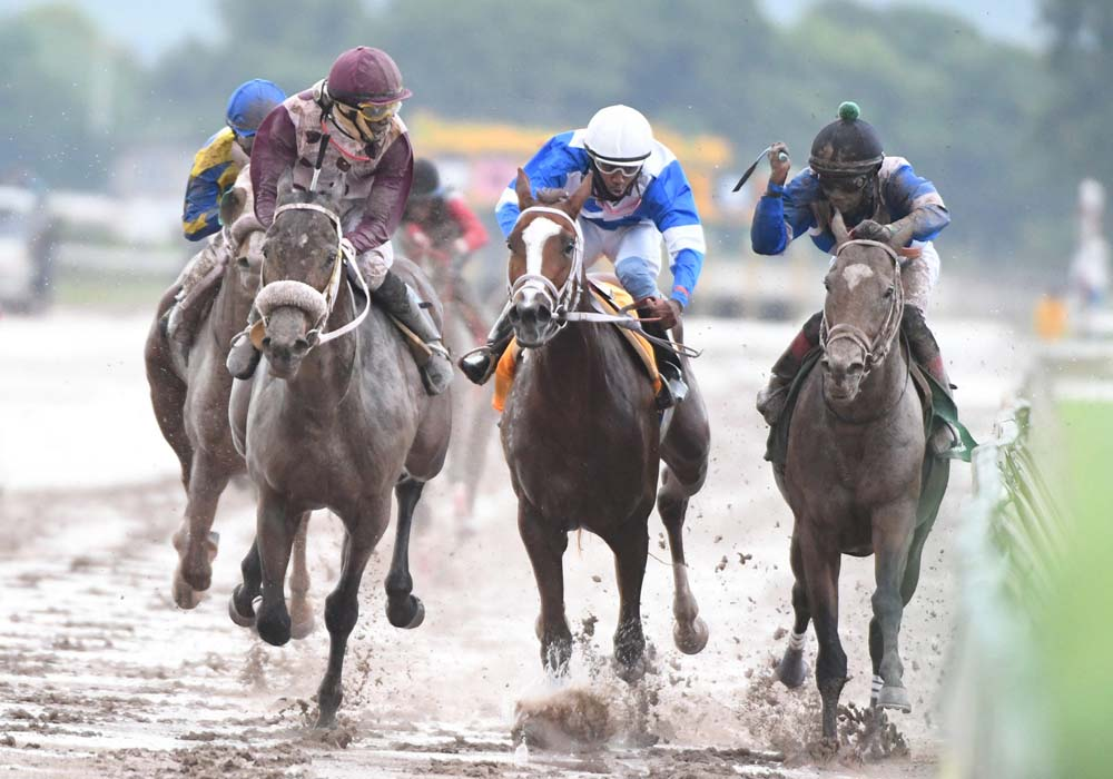 In the slop and mud, King Arthur with jockey Phillip Parchment taking a look at nearest rival Nipster (on the inside) as he powers to victory in the 100th running of the Jamaica Derby. In between King Arthur and Nipster is third place finisher Another Affair (Jerome Innis). At left is Oneofakind (Dane Nelson).