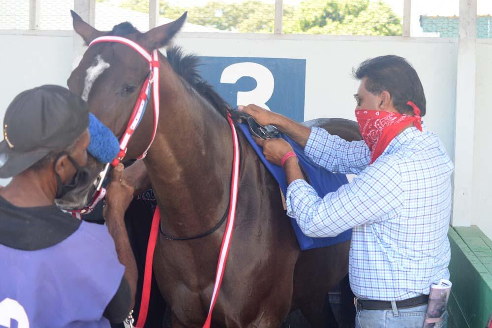 Trainer Ian Parsard (right) saddles She's A Wonder. (File photo)