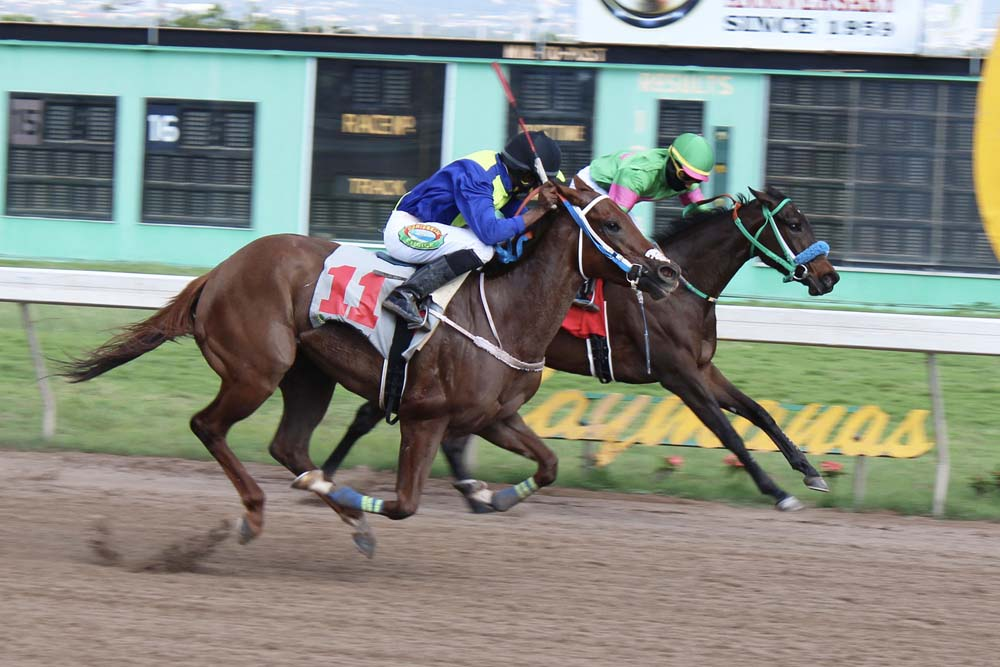 Solid Approach (#11) with Omar Walker in the saddle in the process of flashing by a determined Ocean Wave (Youville Pinnock). (Photo: Kimberly Bartlett)