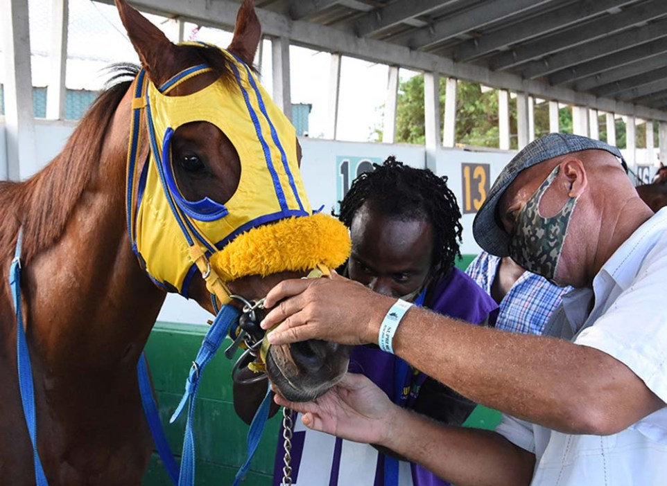 Trainer Vincent Atkinson (right) preparing Chace The Great for a racing engagement.