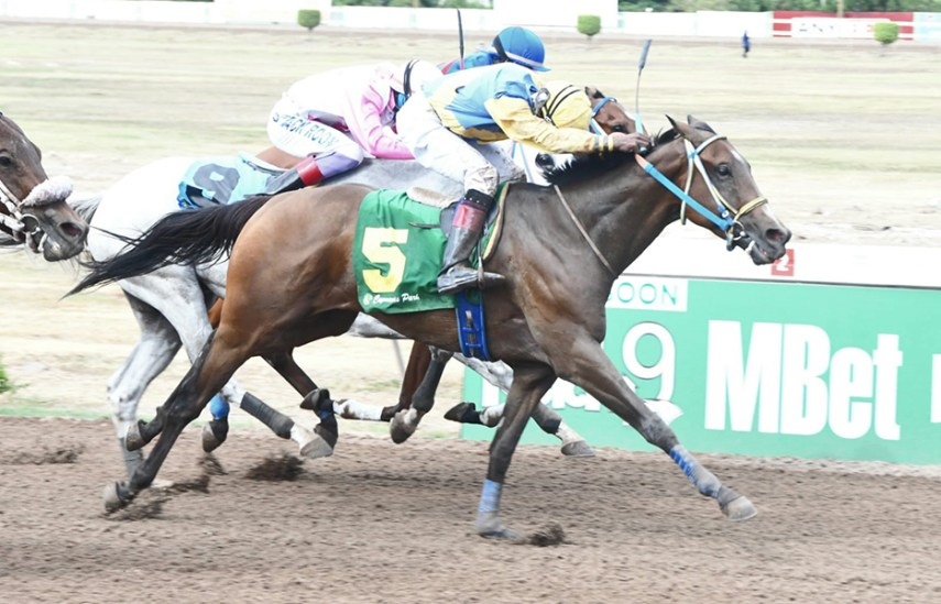 Jockey Chalrick Budhai digs deep on Helicopter at odds of 46-1 in Caymanas Saturday eighth.