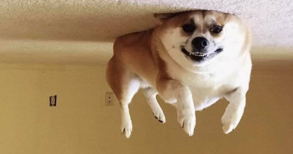 תמונות של חיות מחמד כבר לא מצחיקות אתכם? חכו ותראו