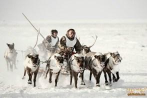 النينيتس، القطب الشمالي، شمال روسيا