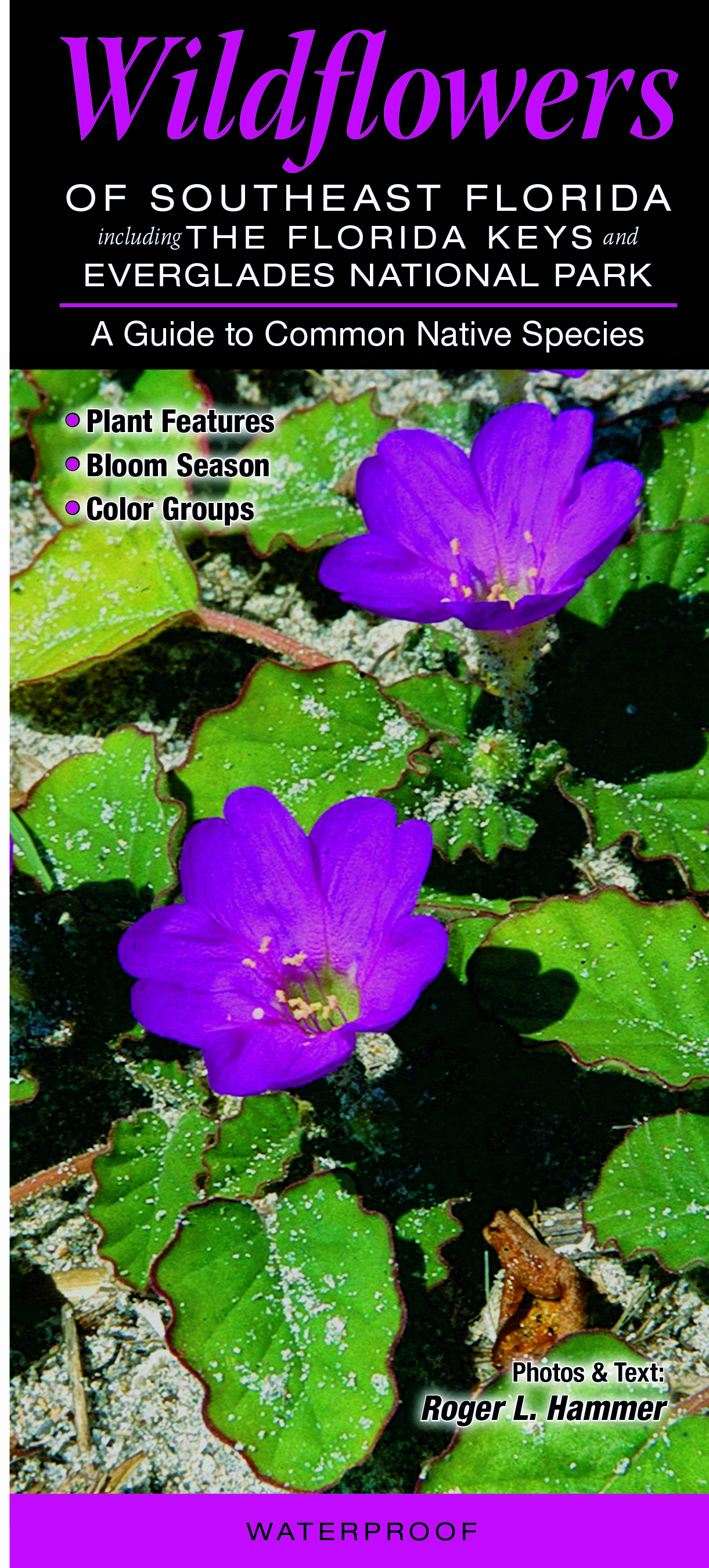 Wildflowers Of Southeast Florida Quick Reference Publishing