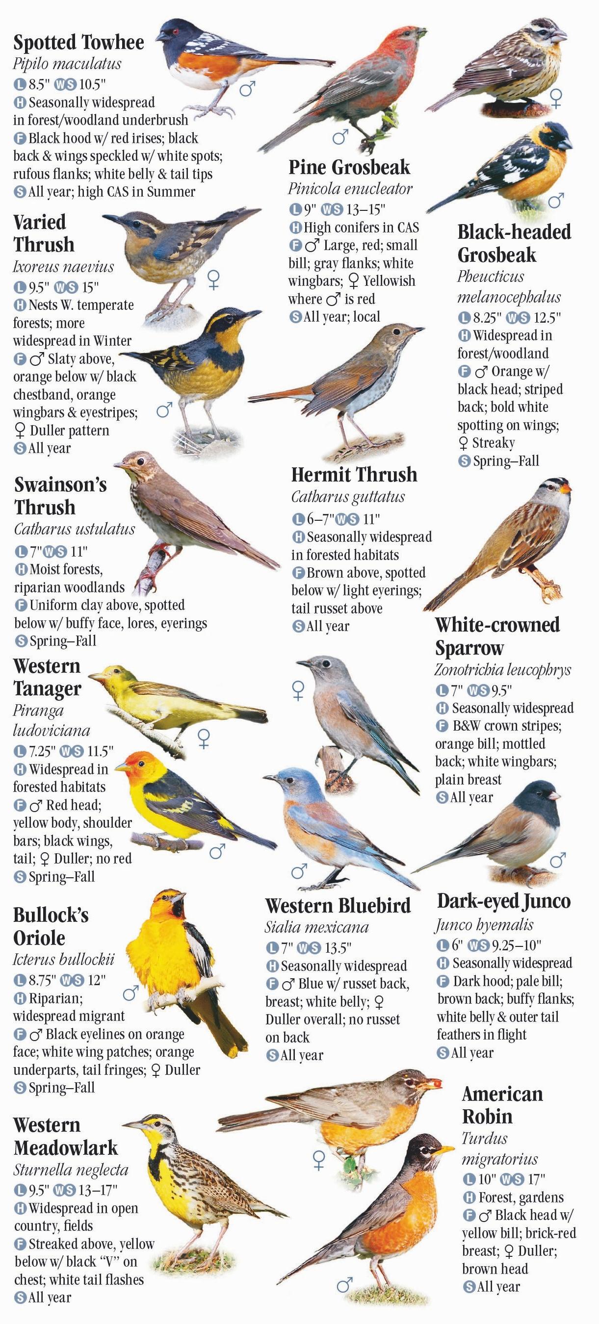 Washington Birds