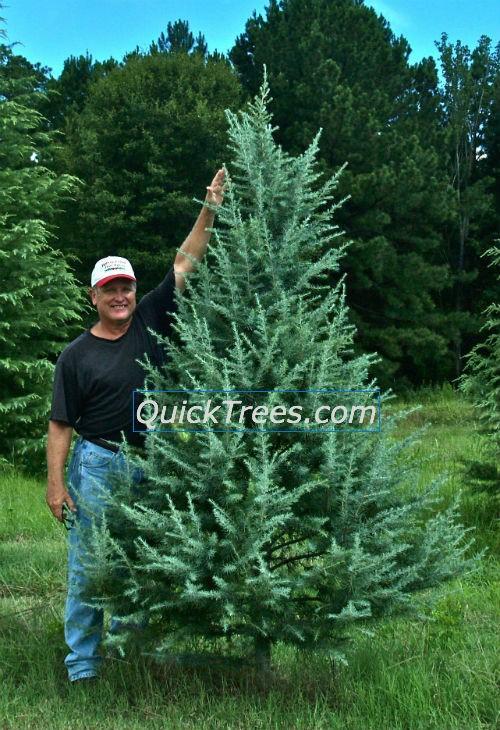 Fast Growing Evergreen Hedge Shrubs