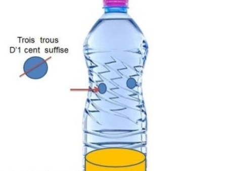Frelons bouteille