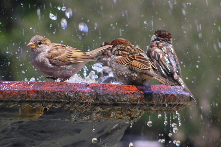 Birds Health Tips – Preventing Salmonellosis