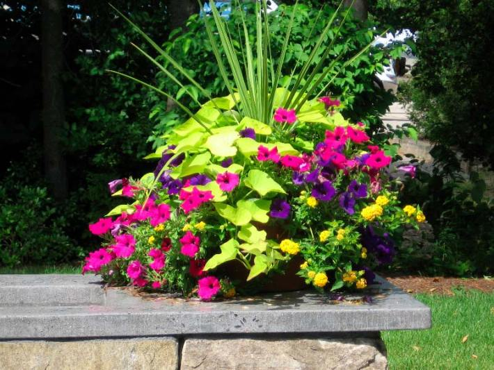 Quiet corner container gardening ideas quiet corner for Container garden ideas