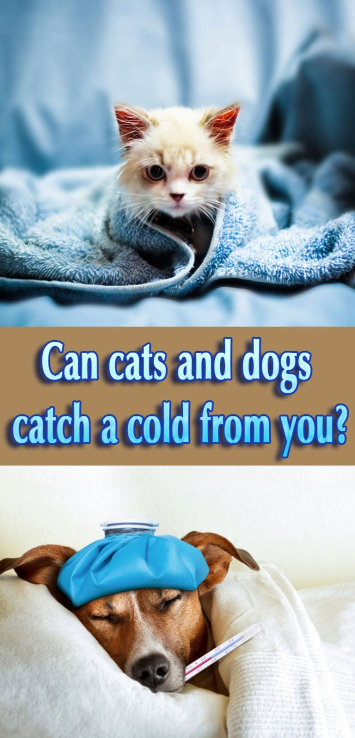 Can Your Pet Catch Your Cold